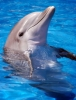 Dolphin836 - Shinycatz breeder