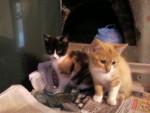 caramelle et chataigne -