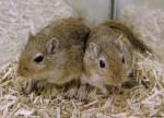 baya et fanny - Mouse (6 months)